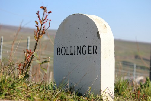 Bollinger Vineyard